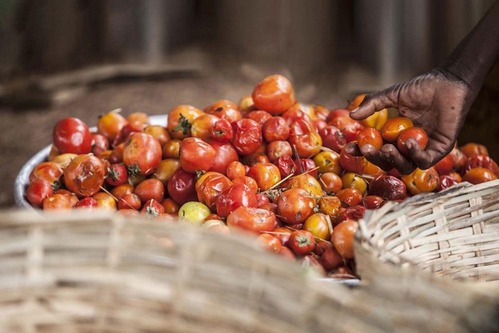 Initiative: Reducing Food Loss andWaste